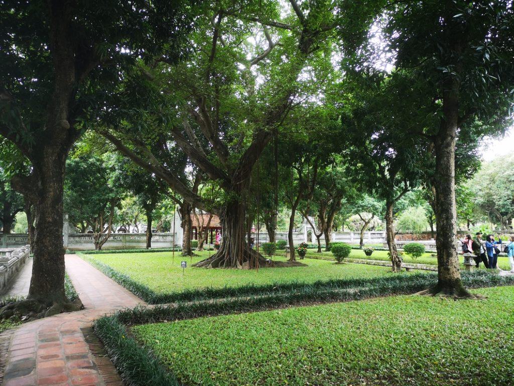 Autre vue sur cet arbre majestueux dans le temple de la Littérature