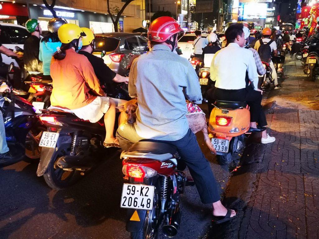 On transporte tout à scooter même son chien :)