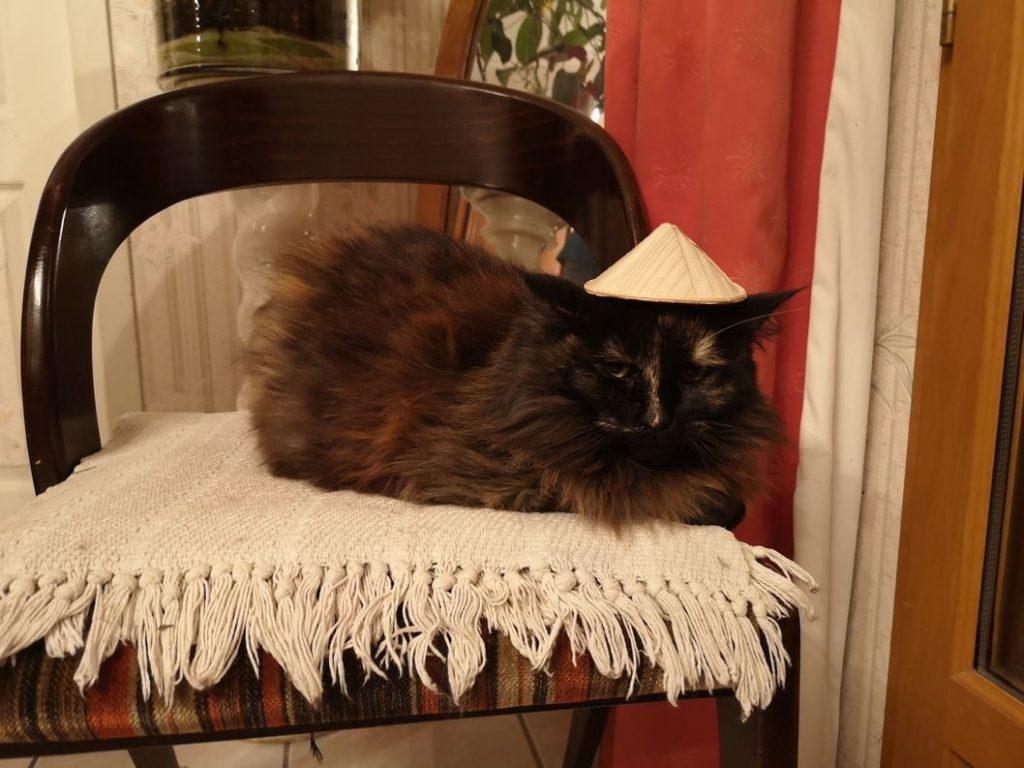 Photo Bonus: Oui, le chapeau conique lui allait bien!