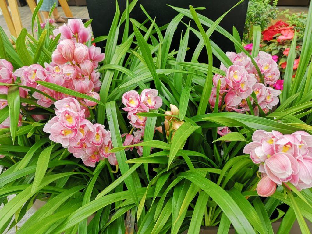 Fleurs dans le Flower Dome