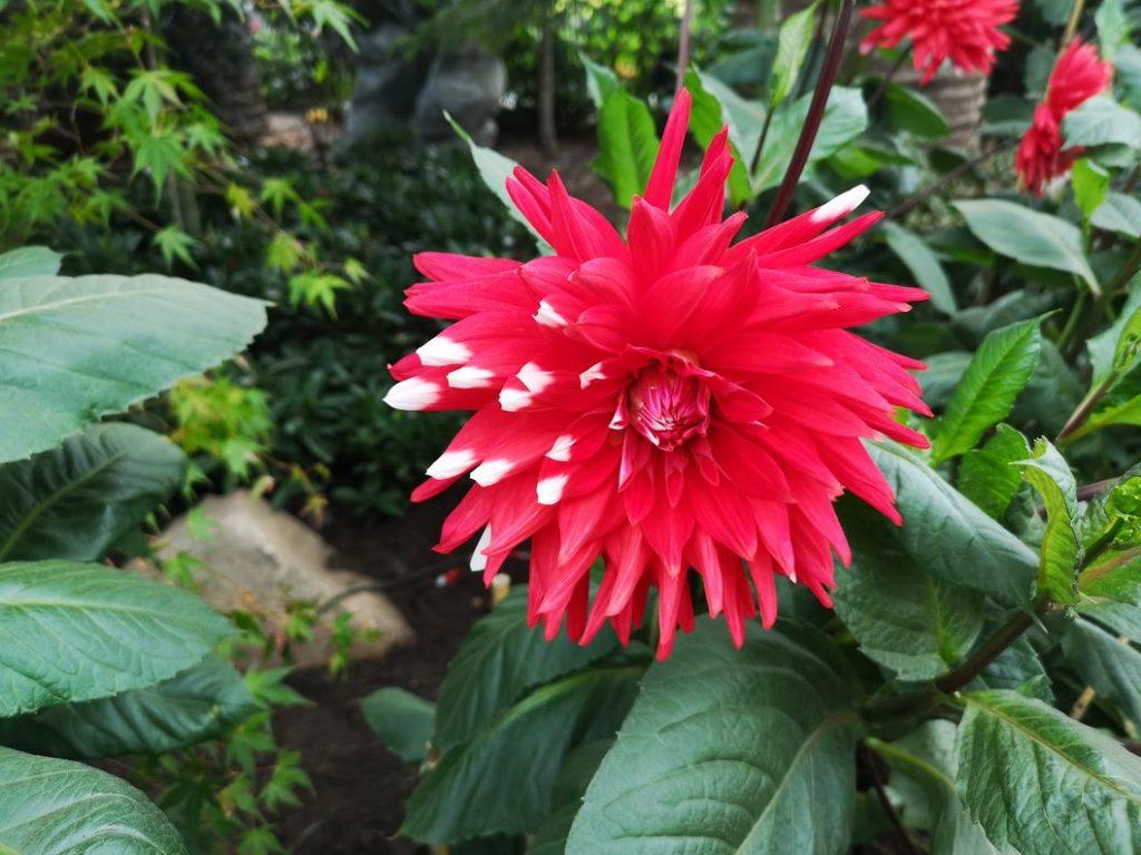 Fleur dans le Flower Dome
