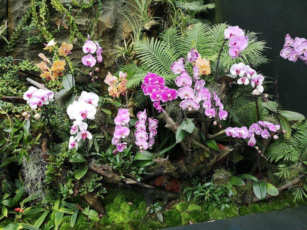 De belles Orchidées dans la Cloud Forest