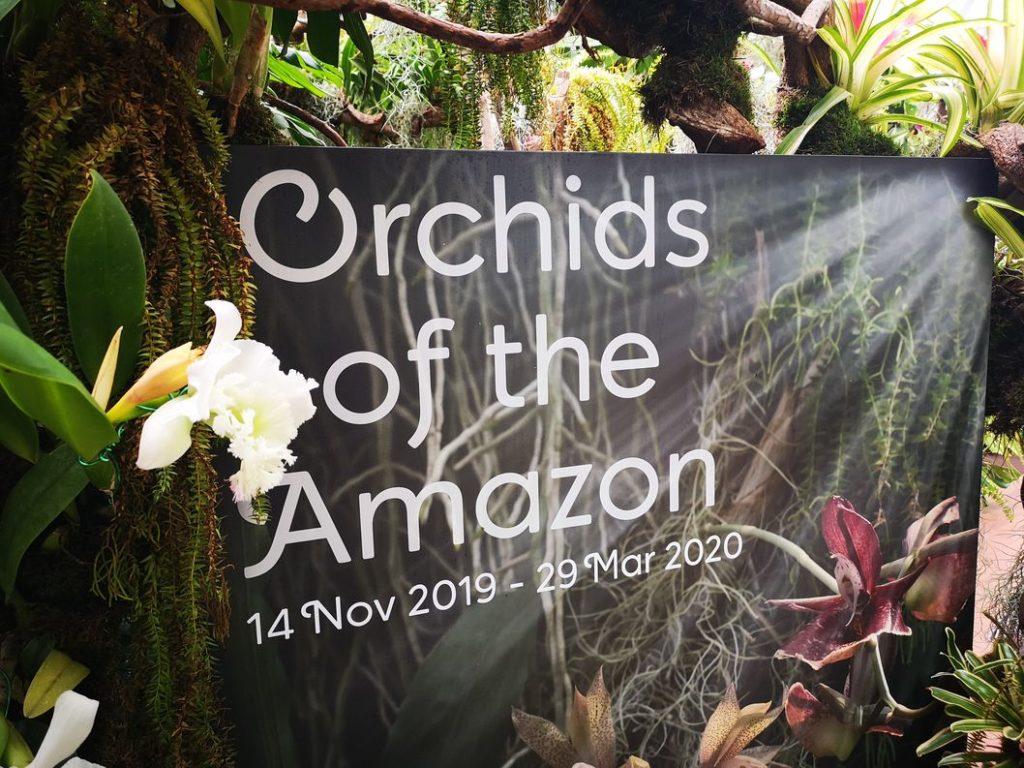 Exposition temporaire sur les Orchidées de l'Amazonie