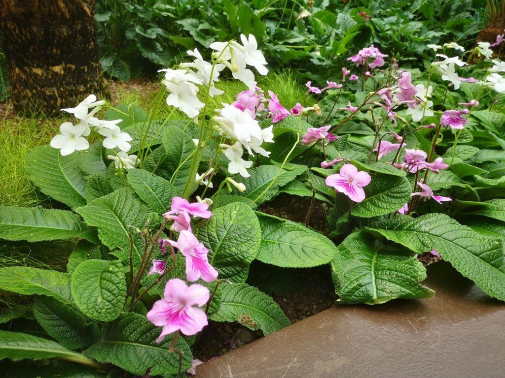Des fleurs dans les jardins botaniques