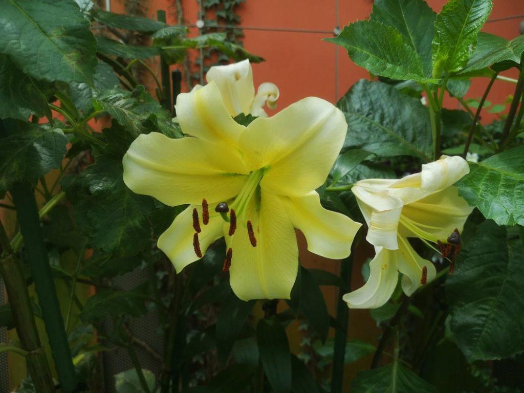 Une autre belle fleur dans le Flower Dome