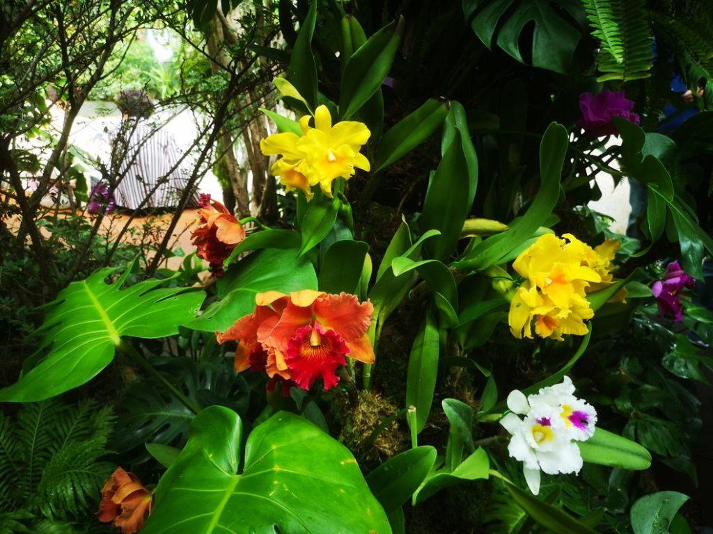 Orchidées dans la Cloud Forest