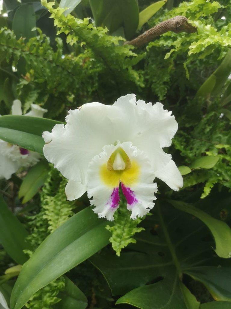 Orchidée dans la Cloud Forest