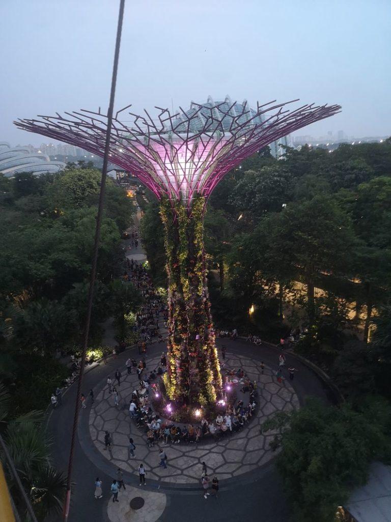 Un des Supertrees vu depuis la Skyway