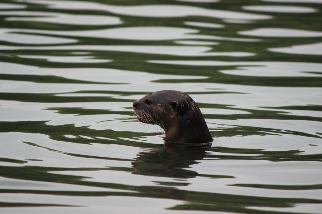 On aperçoit une petite tête qui sort de l'eau au milieu des Gardens by the Bay